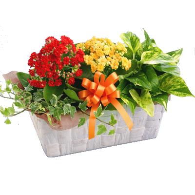 花キューピットタウン 敬老の日鉢物特集