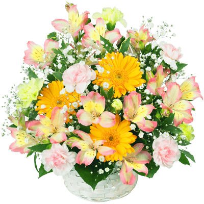 花キューピットの春の誕生日