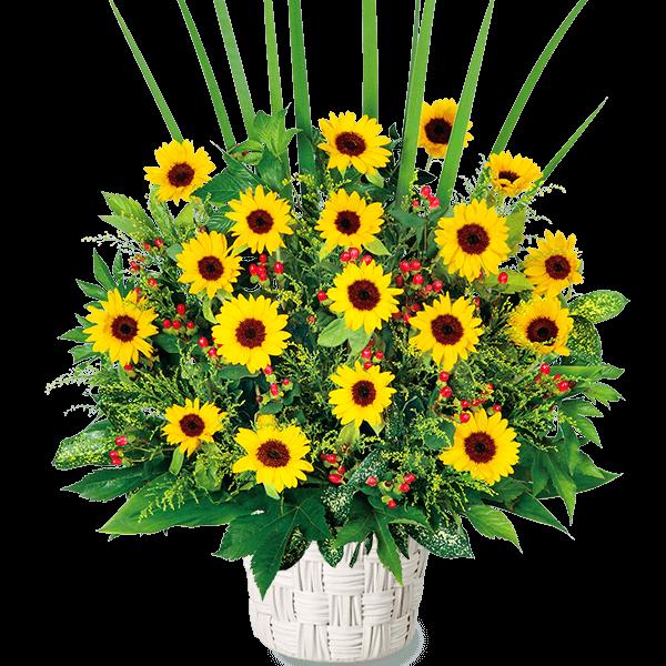 ひまわり開店・開業祝いのプレゼント |花キューピットのひまわり プレゼント・ギフト特集2021