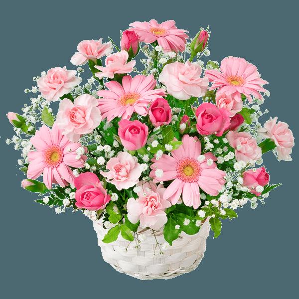 【卒園卒業・入園入学祝い】ピンクガーベラのアレンジメント