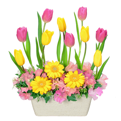花キューピットのチューリップ特集