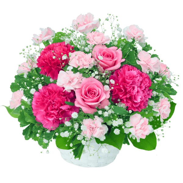 5月の誕生花 ピンクバラ