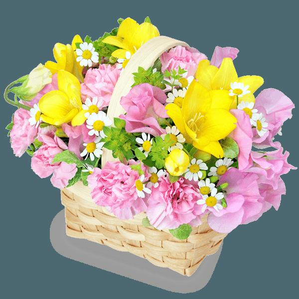 フリージア フリージア 感謝と友情を伝える|花キューピットのチューリップ特集 2020