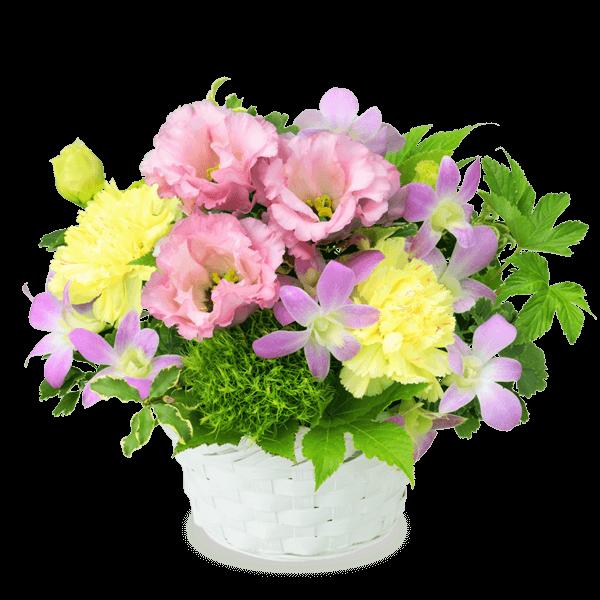 お中元・暑中見舞い|花キューピットの夏の花贈り特集におすすめ!人気のプレゼント特集 2020