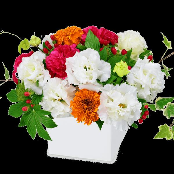花キューピットの夏の花贈り