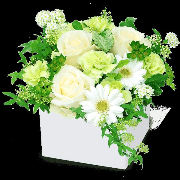 優しげで愛らしい花  白バラのギフト|花キューピットの秋の結婚結婚記念日におすすめ!人気のプレゼント特集 2019