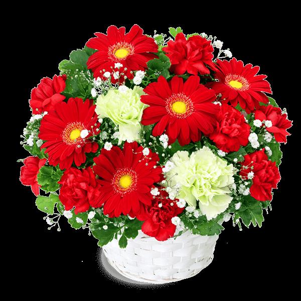 赤系の花 冬の花贈り2020