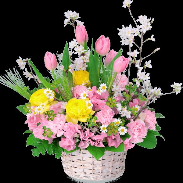桜 桜 春を代表する花|花キューピットのチューリップ特集 2020