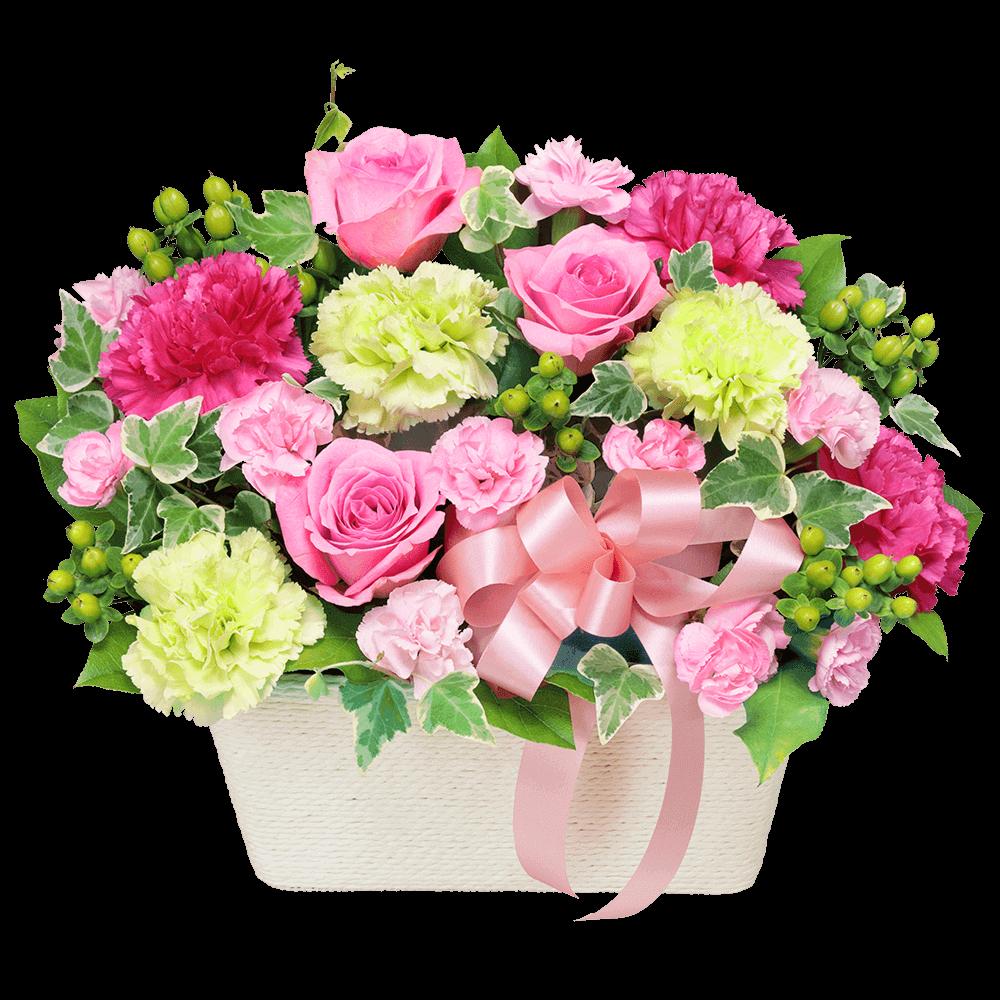 5月の誕生花・ピンクバラ