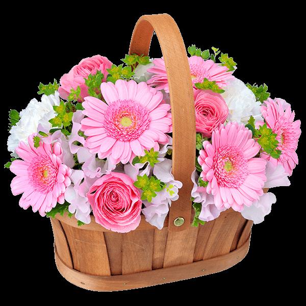 3月の誕生花・ピンクガーベラ