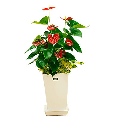 花i879selection 産直観葉植物