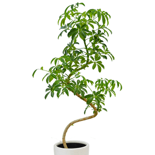 i879selection 産直観葉植物