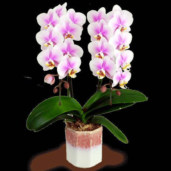 迷ったらチェック 2019 産直花鉢 おすすめランキング|花キューピットの敬老の日におすすめ!人気のプレゼント特集 2019