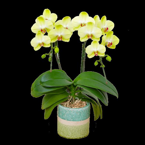黄色・オレンジ系の花鉢 母の日プレゼント特集2020