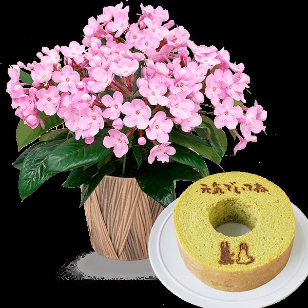 敬老の日限定「におい桜」(ココ)とうさぎの森のこもれびバウム 小野茶