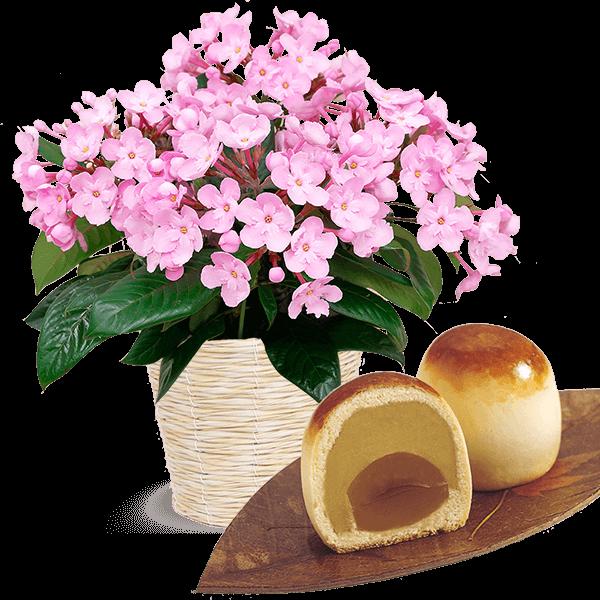 敬老の日限定「におい桜」(ココ)と栗ほまれ 4個入り