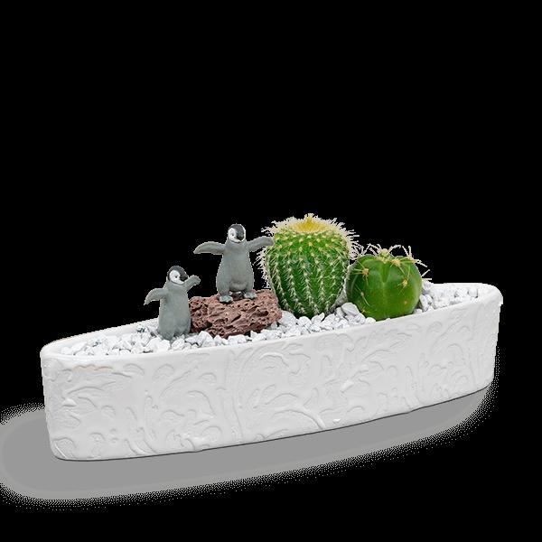 【産直 サボテン・多肉植物】サボテン寄せ植え(ペンギン)