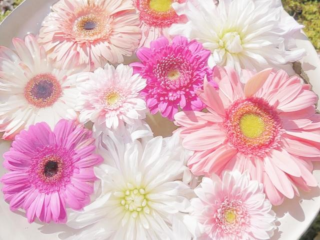 お祝いギフトに最適な花言葉を持った植物