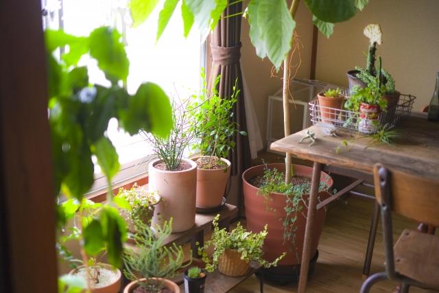 法人ギフトにおすすめの観葉植物~メリットと選ぶ時のポイント~
