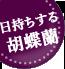 お盆(新盆・初盆)|花キューピットおすすめの季節のフラワー