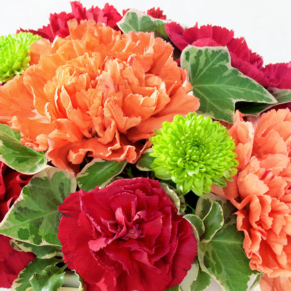 【母の日ギフト】グラマラス(レッド)母の日にぴったりな赤いカーネーション