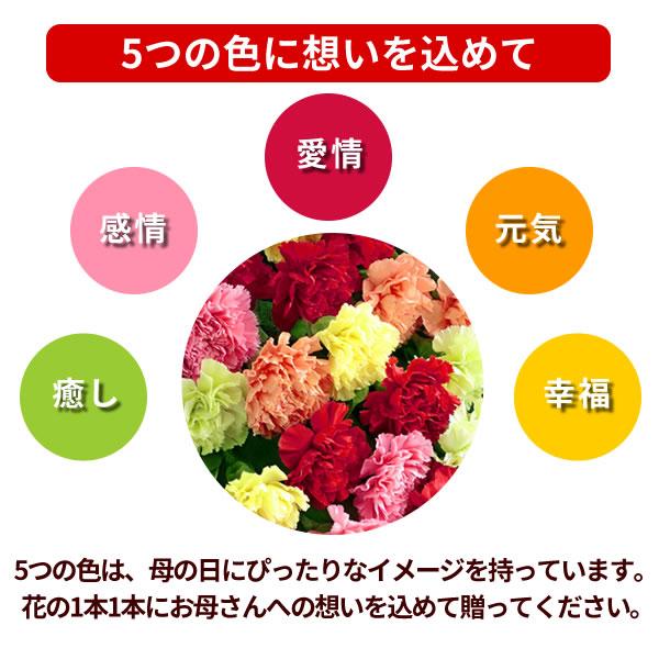 【母の日】カラフルな【母の日】カーネーションの花束|母の日プレゼント特集2019