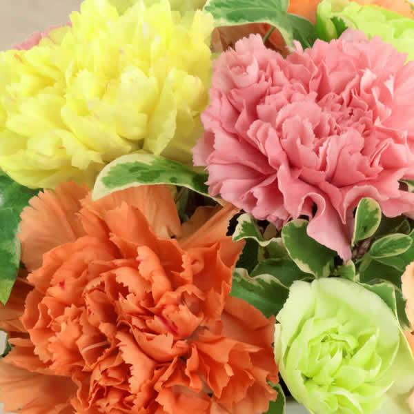 【母の日ギフト】グラマラス(カラフル)カラフルなお花で母の日が楽しくなります