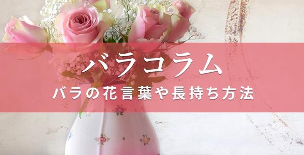 人気の花「バラ」を楽しむ情報をご紹介