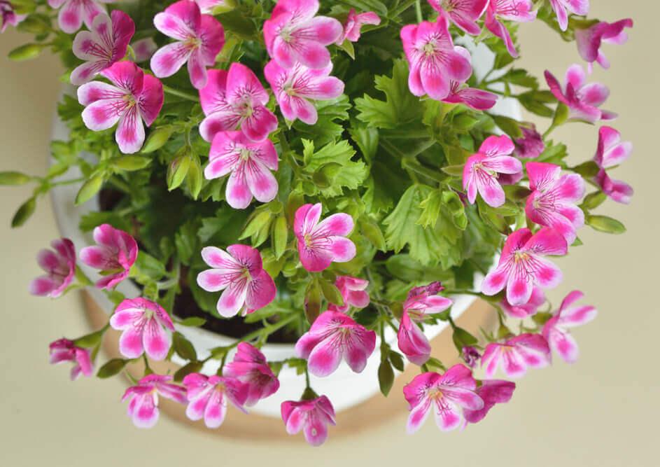 母の日に、息子から花束や鉢植えのプレゼント。