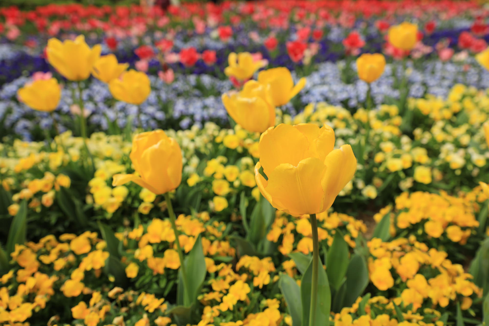 2月の誕生花の花言葉や育て方