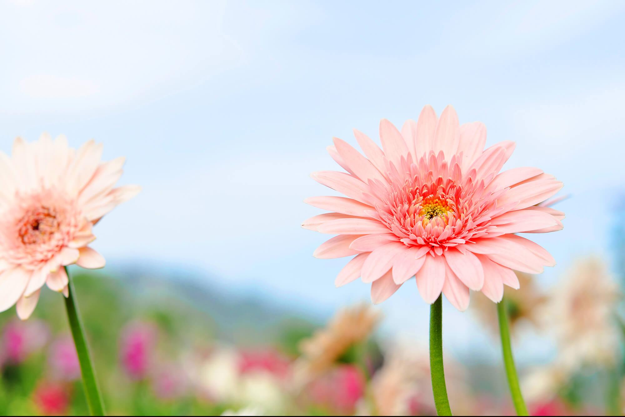 3月の誕生花の花言葉や育て方