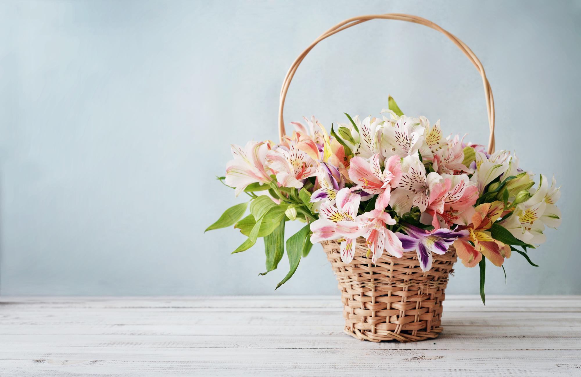 4月の誕生花の花言葉や育て方