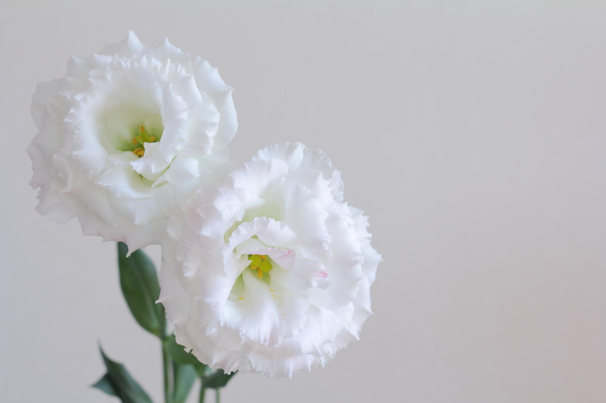 8月の誕生花の花言葉や育て方