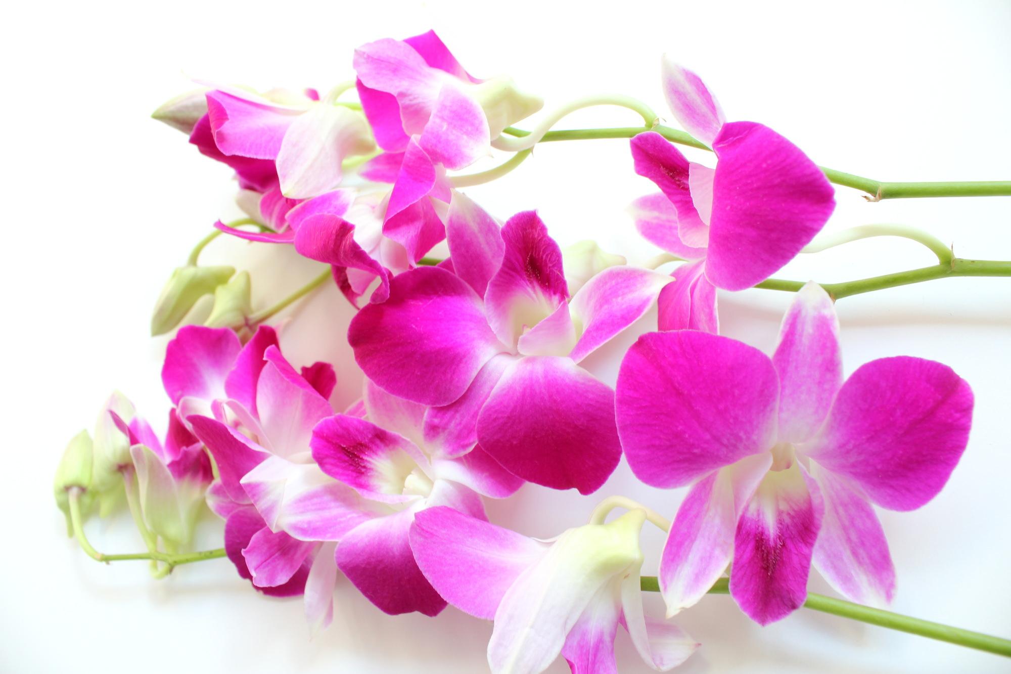 9月の誕生花の花言葉や育て方