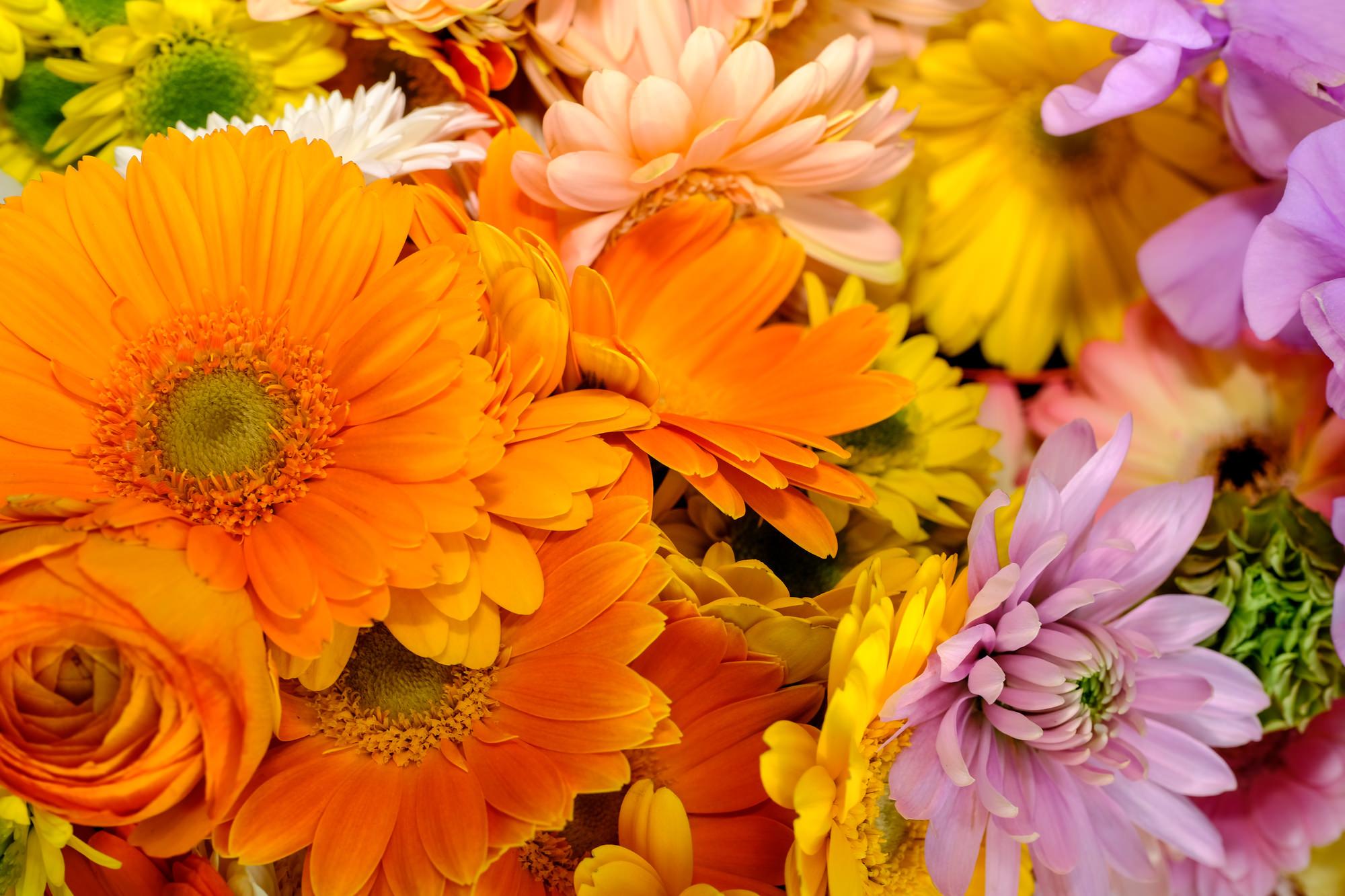 可憐な姿が印象的なふたつの花