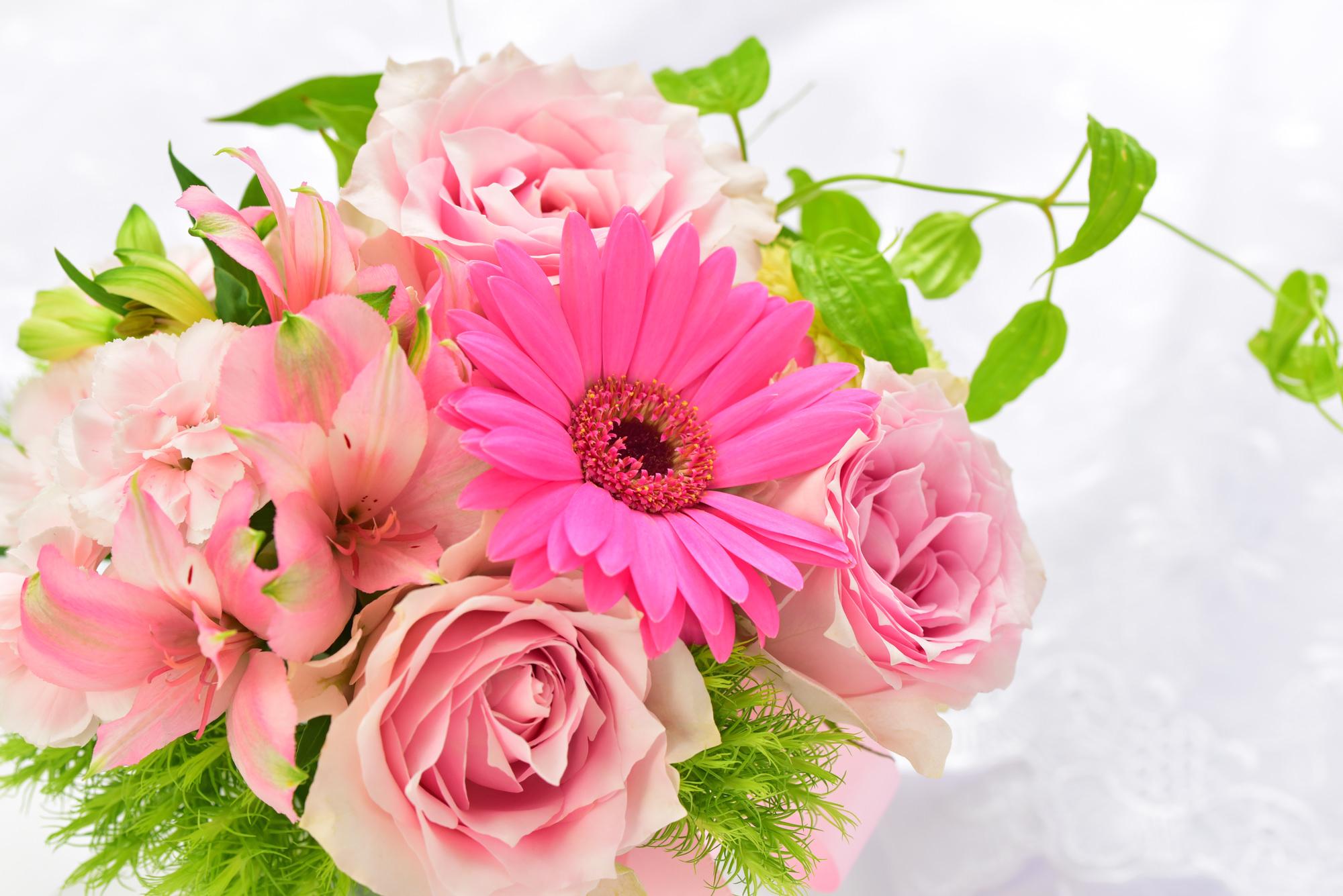 11月の誕生花の花言葉や育て方