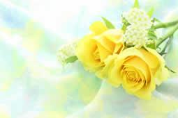 バラのお手入れ|父の日 コラム