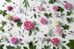 カーネーションと相性のよいお花|母の日 コラム