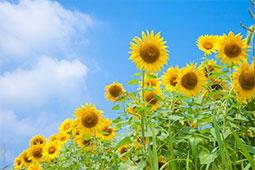 特別な気持ちを贈ることができる花|花コラム