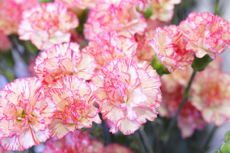 お花を育てながら、母の日を思い出す