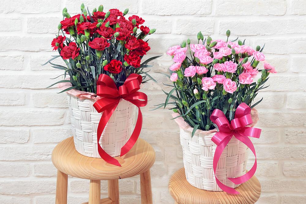 カーネーションの花鉢