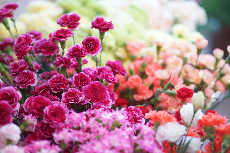 花びらの色が持つパワー