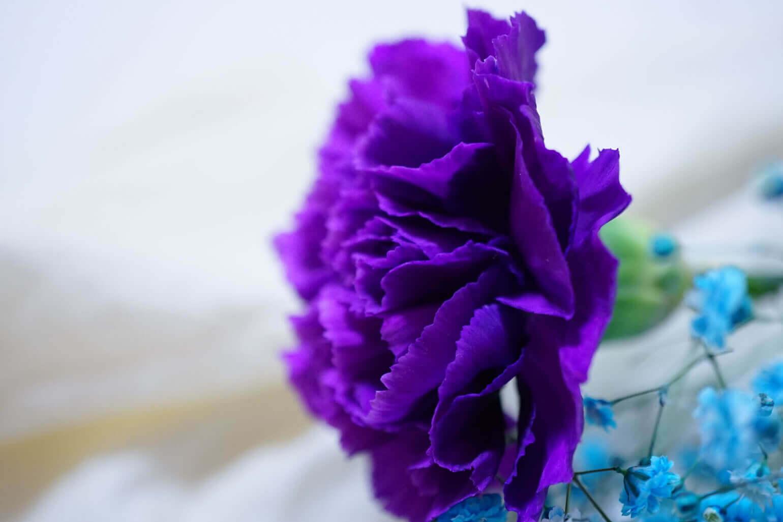 美しい名前と花言葉は、美しいブランドコンセプトから生まれた