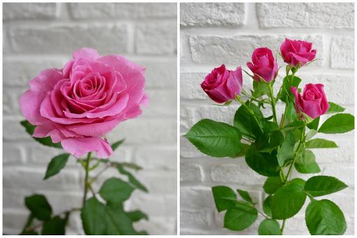お花の数で変わるバラのスタイル