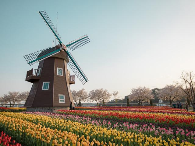 オランダとチューリップの歴史
